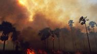 亚马孙森林大火已持续燃烧16天